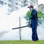 5 Easy Ways to Find an Organic Pest Control Specialist