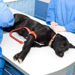 Reasons to Find a Vet That Offers Compassionate Care