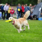 When a Pet Needs a Safe Place: Events That Require Dog Boarding in Chicago