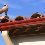 What You Need to Know About Roof Repairs